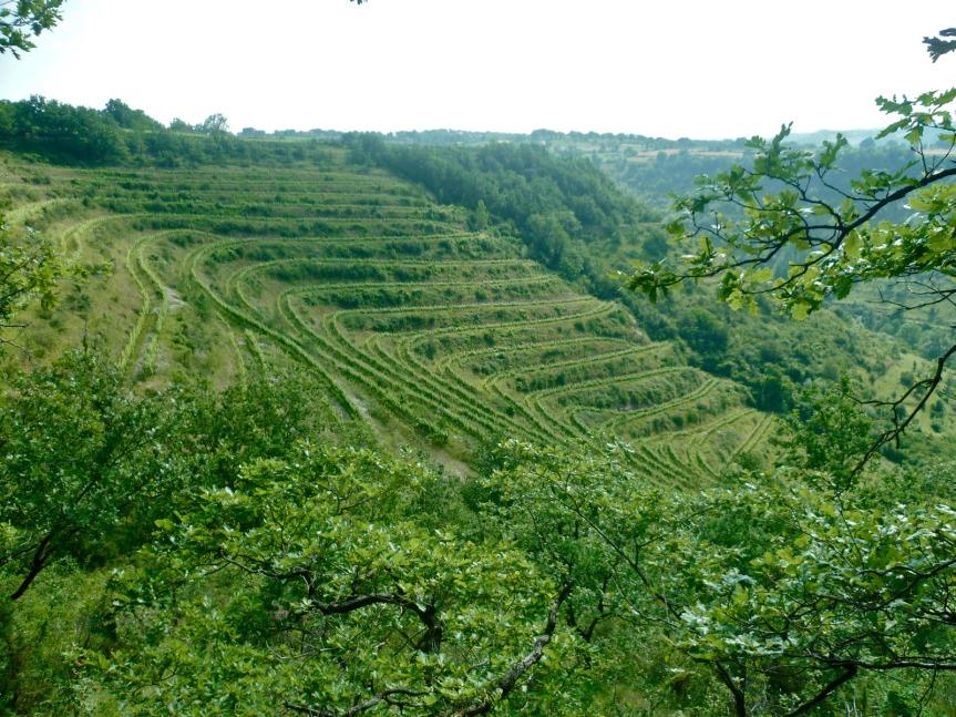 Les vignes en amphithéâtre du vallon de Marcillac, près de Rodez.