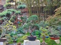 Jardin de bonsaïs (exposition et vente) - Rue Tolosane.