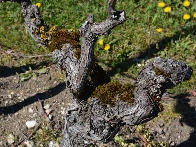 Balade dans les vignes, à la découverte des vins de Cahors bio.