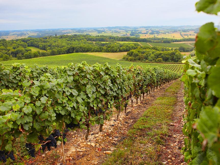 Le vignoble de Madiran, entre Hautes-Pyrénées et Gers.