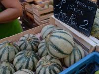 Melons de Lectoure (Gers)