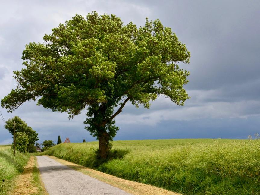 arbre_st_sernin (1)