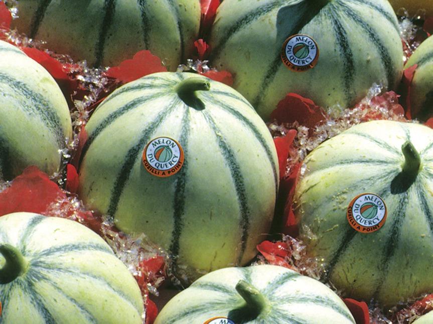 melon_quercy