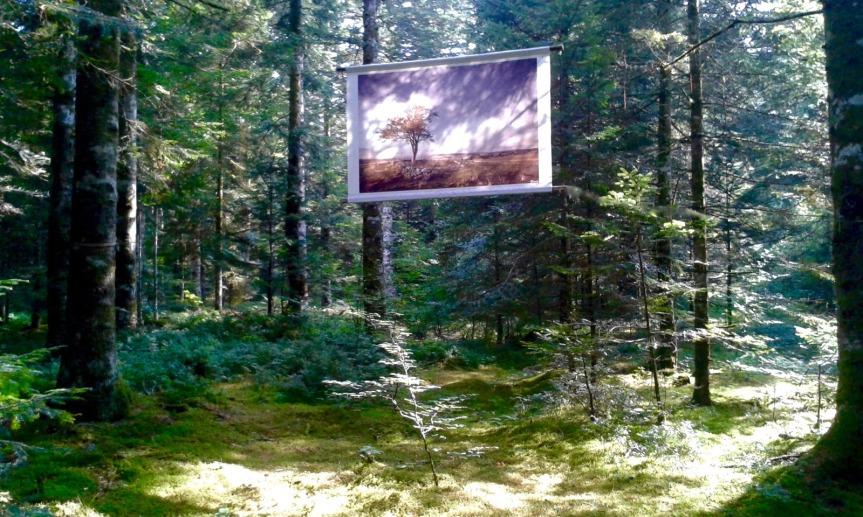 Balade onirique et poétique dans le bois de Guirande, près du village de Lacalm.