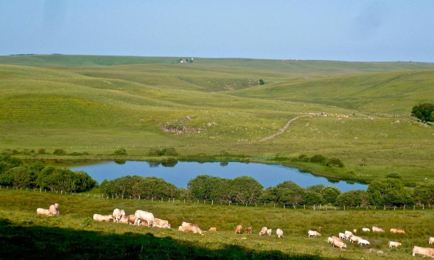 L'un des nombreux lacs de l'Aubrac, qui se trouve à cheval entre 2 régions : Occitanie et Rhône-Alpes Auvergne.
